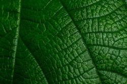 Fragment of a leave closeup