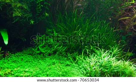 Fragment of the freshwater aquarium plants