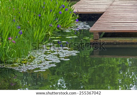 fragments of a garden pond - pier made of wooden planks, surface of the pond and beautiful water plants