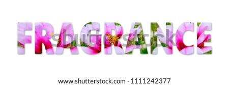 Fragrance word from Peony flowers isolated on white. Fragrance bloom lettering background #1111242377