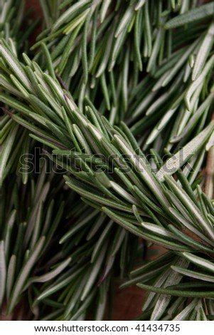 Fragrant rosemary herbs isolated on white