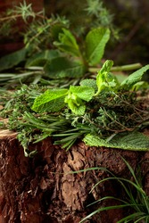 Fragrant uncultivated herbs on a stump in the forest. Fresh thyme, rosemary, and mint.