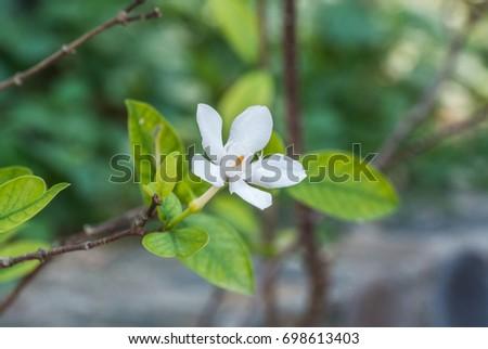 Fragrant white flowers ez canvas fragrant white flowers mightylinksfo