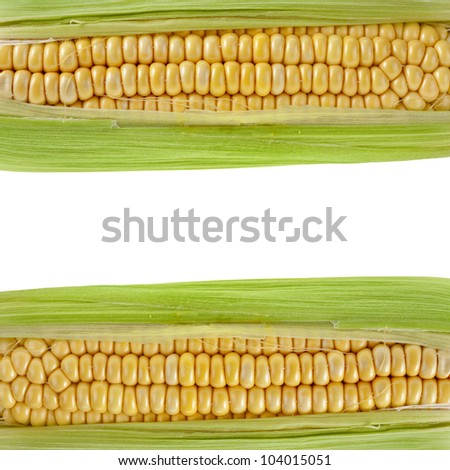 Frame Border of Corn ear with copy space isolated on white background