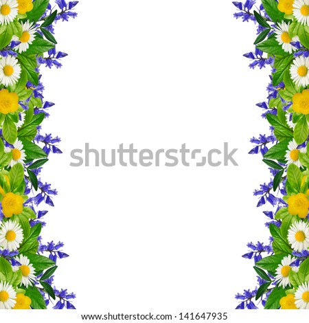 Frame: different colorful flowers on the white background