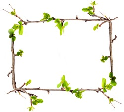 Frame from branches with green leaves.
