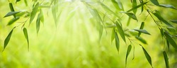 frame from fresh green bamboo leaves, abstract blurred bamboo leaf background, bamboo branch in sunlight, beautiful japanese spring garden landscape panorama