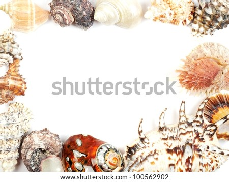 Frame from seashells over white, with copy space
