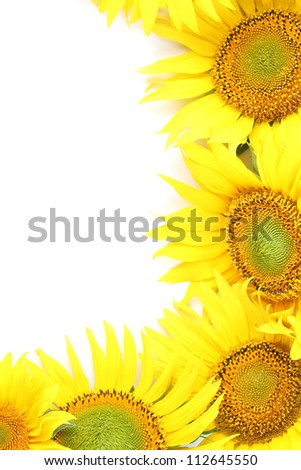 Frame made from beautiful yellow sunflowers isolated on white background