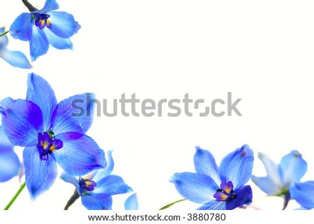 Frame made of blue flowers - stock photo