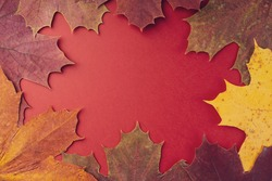 Frame made of different dried maple leaves on a red background, flat, flat, top view, copy space. Autumn composition, screensaver. Creative layout of colorful autumn leaves. Autumn season concept.
