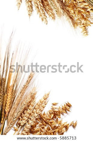 Frame made of different wheats isolated on white.
