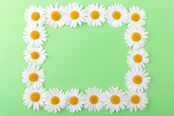 Frame made of fresh white daisies on a green background.Copy space.Chamomile  flowers in the form of a rectangle.Selective focus.Top view.Concept of decoration and design