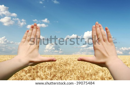 Frame made of hands at wheat field