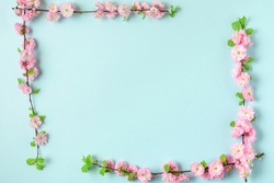 Frame made of spring pink cherry blossom branches on blue background. Flat lay. Top view. Holiday or wedding layout with copy space