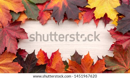 Frame of autumn maple leaves on a white wooden background - a beautiful template for an autumn card or congratulations