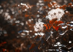 Frame of  autumn thorn, a flower with down, among brown leaves, moss, bokeh and sun effects