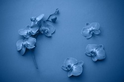 Frame of beautiful blue orchid flowers.   Color of  year 2020 Classic Blue pantone