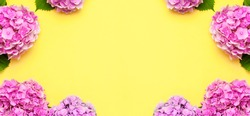 Frame of Beautiful flowers of pink hydrangea on yellow background top view flat lay copy space. Flower card. Holiday, congratulations, happy mothers day. International Women's day. Festive background