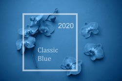 Frame of beautiful orchid flowers.  Color of  year 2020 Classic Blue pantone