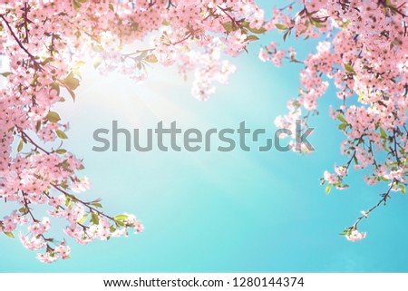 Frame of branches of blossoming cherry against background of blue sky and fluttering butterflies in spring on nature outdoors. Pink sakura flowers soft focus, dreamy romantic image of spring nature. #1280144374