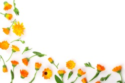 Frame of Calendula. Marigold flower isolated on white background. Corner with copy space for your text. Top view