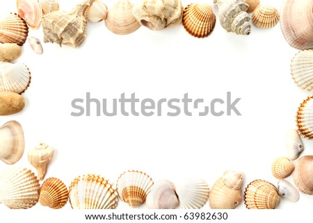 Frame of conch shells