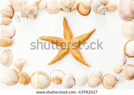 Frame of conch shells with starfish in center