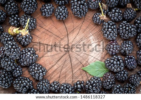 Frame of freshly picked, ripe blackberries, on a stump at the garden. Juicy and fresh berries with leaves on rustic wooden surface. Concept for healthy natural eating and nutrition.