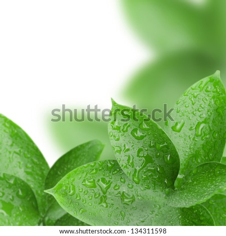 frame of green leaves with water drops, closeup
