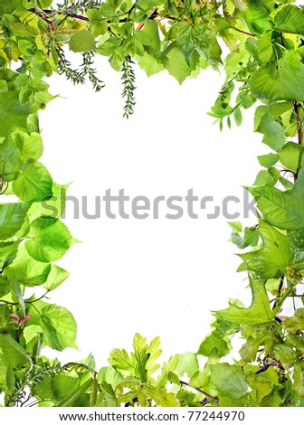 frame of green plants