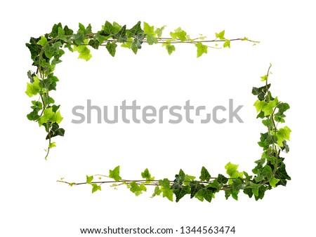 Frame of ivy -Fresh ivy leaves on white background #1344563474