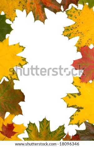 Frame of maple leaves over white background