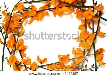 frame of orange flowers on a  white background #42499357
