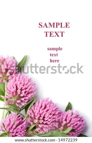frame of pink clover flowers isolated with copy-space