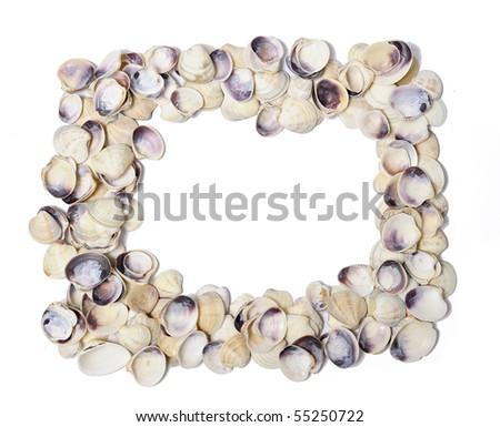 Frame of shells isolated over white