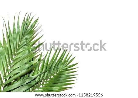 Frame of tropical leaves palms on white background a space for text. Isolated. Top view, flat lay #1158219556