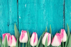 Frame of tulips on turquoise rustic wooden background. Spring flowers. Spring background. Greeting card for Valentine's Day, Woman's Day and Mother's Day. Top view.