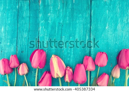 Frame of tulips on turquoise rustic wooden background. Spring flowers. Spring background. Valentine's Day and Mother's Day background. Top view.