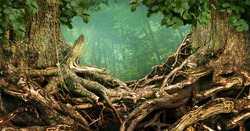 Frame of two trees with old massive interlaced crooked roots in forest