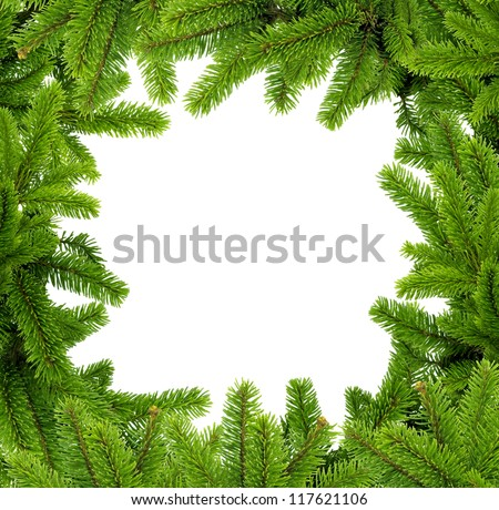 Frame the branches of pine on white background