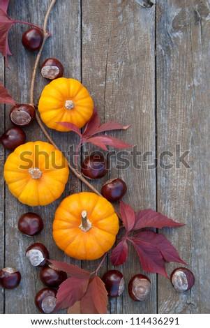 Frame with pumpkins and chestnuts/autumn/pumpkins