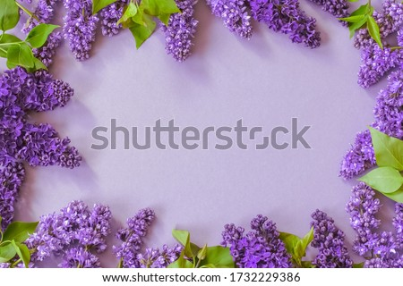 frame with purple lilac flowers. background with lilac flowers. branches of blooming lilac lay flat. lilac copy space.