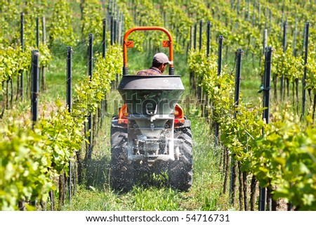 Framer is just spreading the dung with tractor in the vineyard