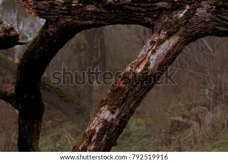 Framing,  fallen tree, a fallen tree, a frame, a frame, forest #792519916