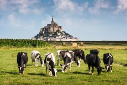 France Manche Mont Saint Michel bay listed as UNESCO World Heritage, cow in pasture  and Mont Saint Michel in the background, France, Europe