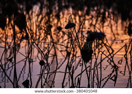 Free photos france mougin a lot of dried lotus flowers in the pond france mougin a lot of dried lotus flowers in the pond at sunset in mightylinksfo