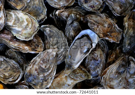 France, oysters at the market in Normandy