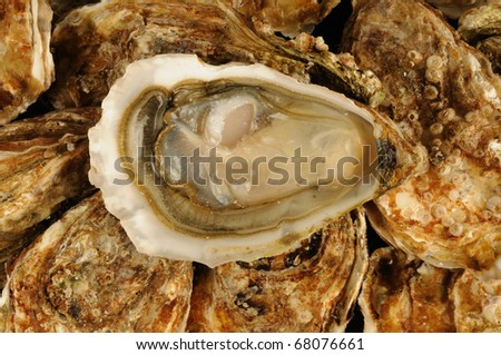 France, oysters at the Trouville market in Normandy