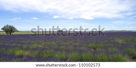 France, Provans, Valensole, summer, 2012 - stock photo
